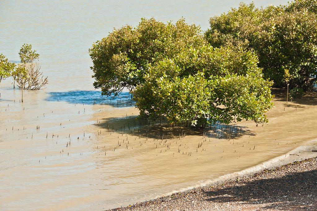 Coromandel to Fletcher's Bay (5 of 37)