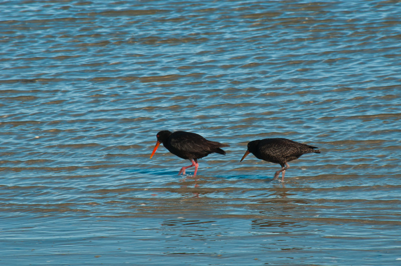 Birds at Marahau