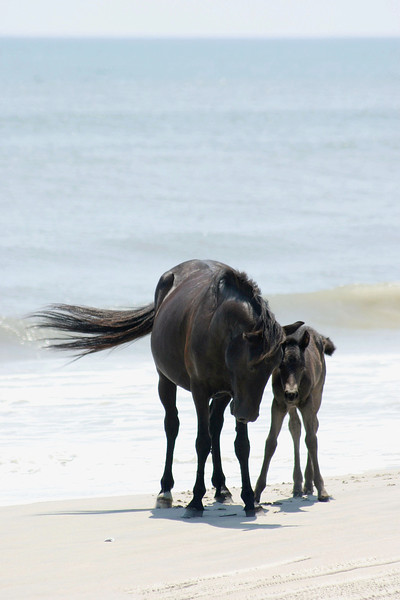 Mare and foal on the beach