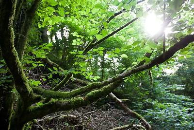 Greenery in Ebbor Gorge