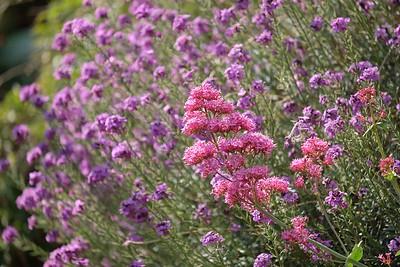 Welsh wildflowers
