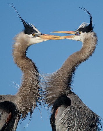 Florida birds of the Everglades