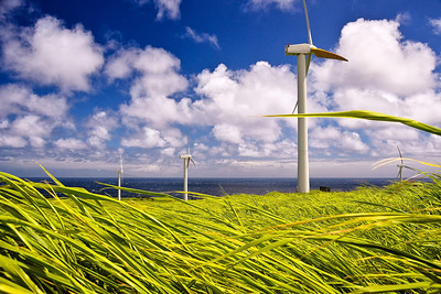 Windmills in U'polu, North Kohala. Big Island Hawaii, July 2012.