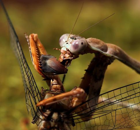 Dragonfly Eye