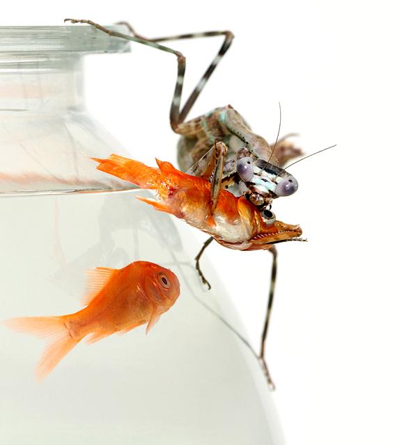 Mantis Goes Fishing
