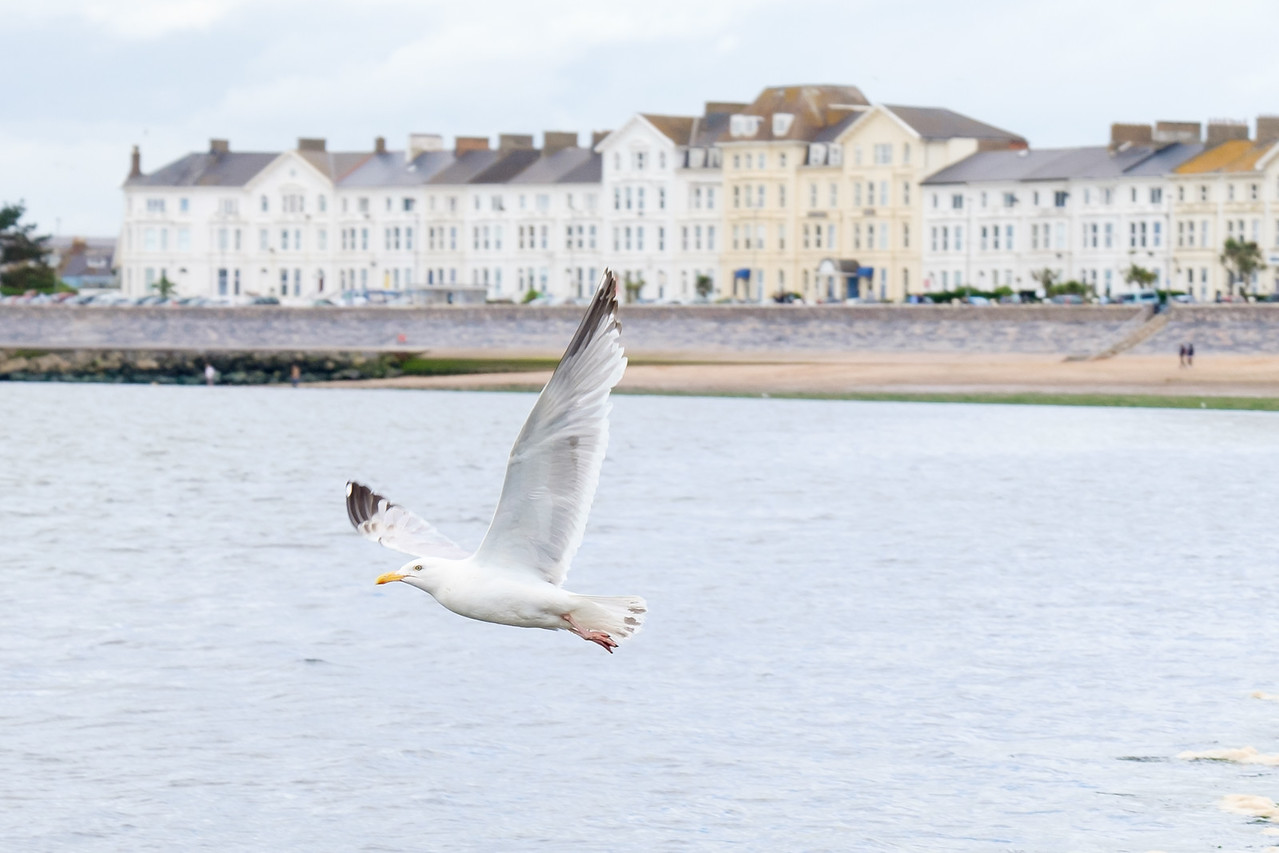 Seagull in Exmouth