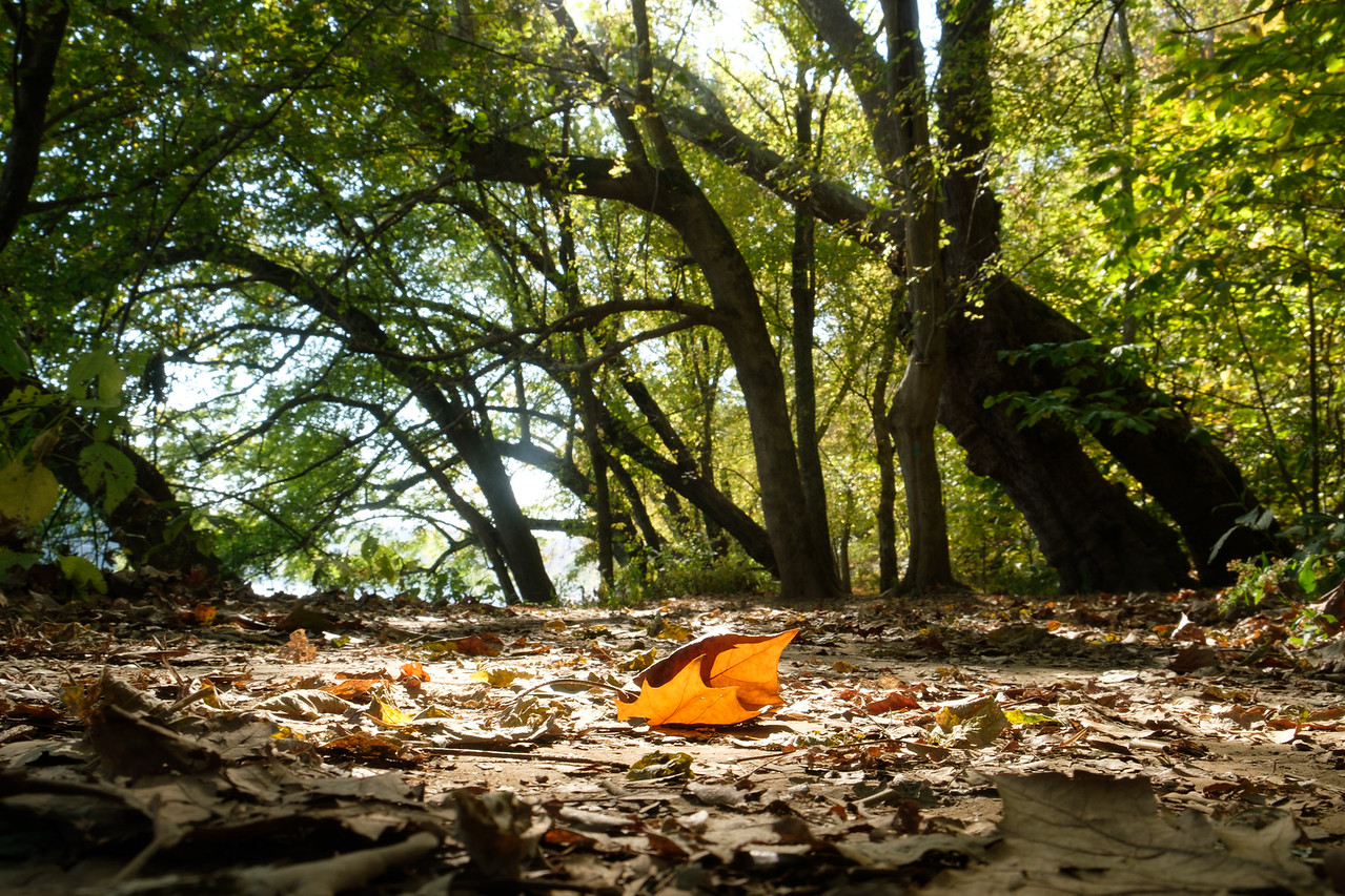 Fall leaf at Riverbend Park