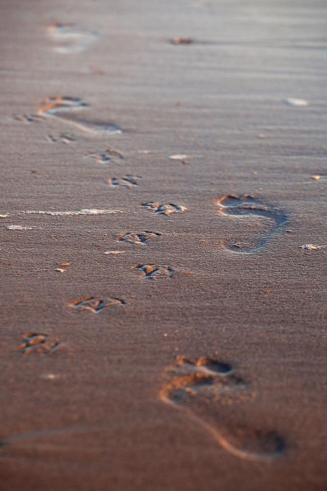 Footprints of all sorts