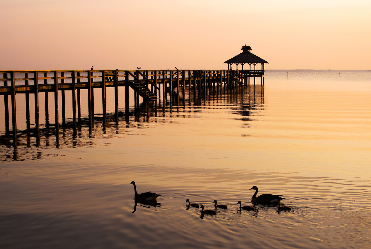 Goose family on the Currituck Sound