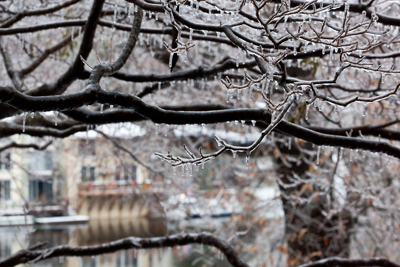 Ice storm at Lake Anne
