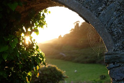 Spiderweb in the setting sun