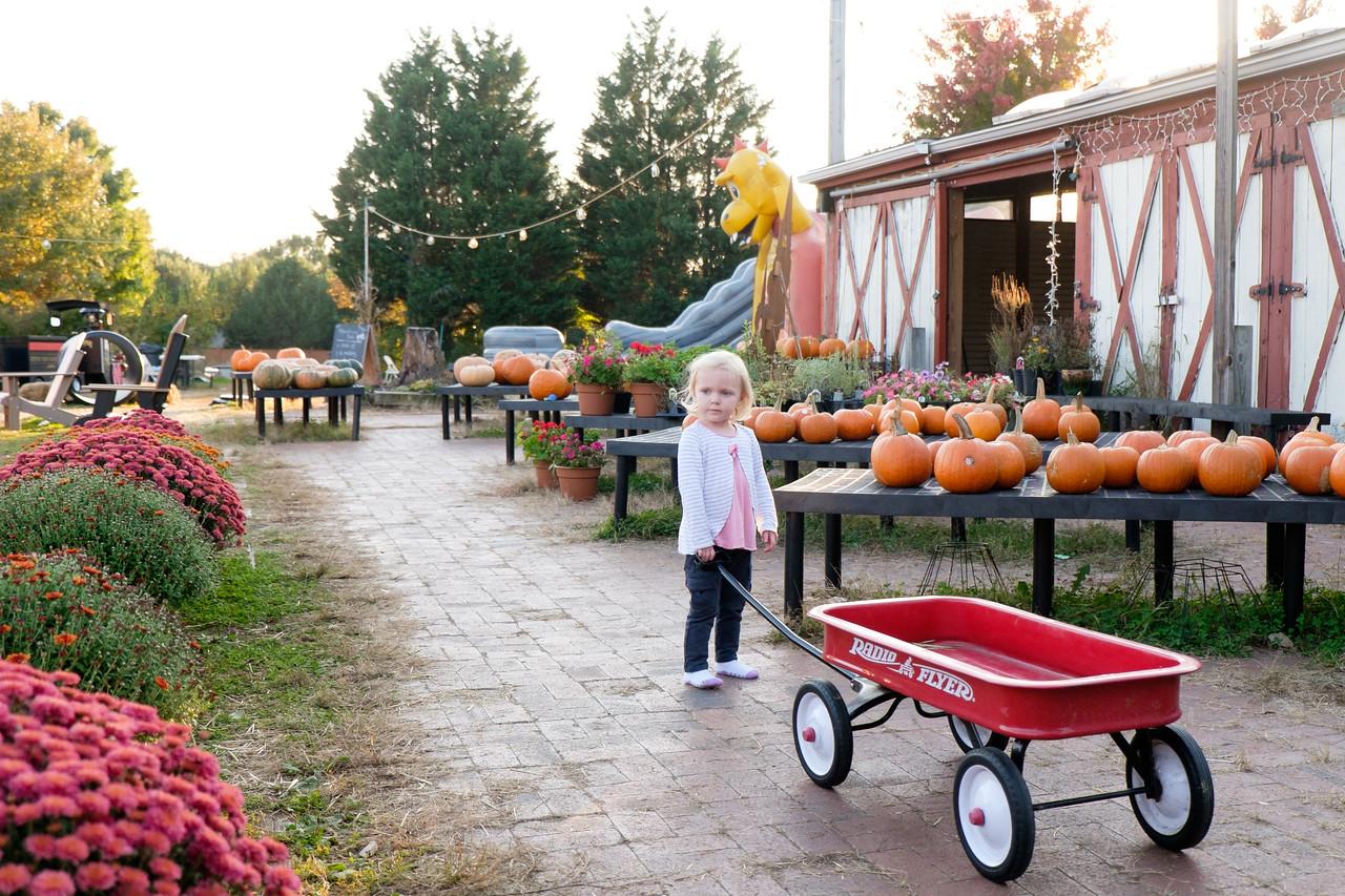 Pumpkin season at the Reston Farm Market