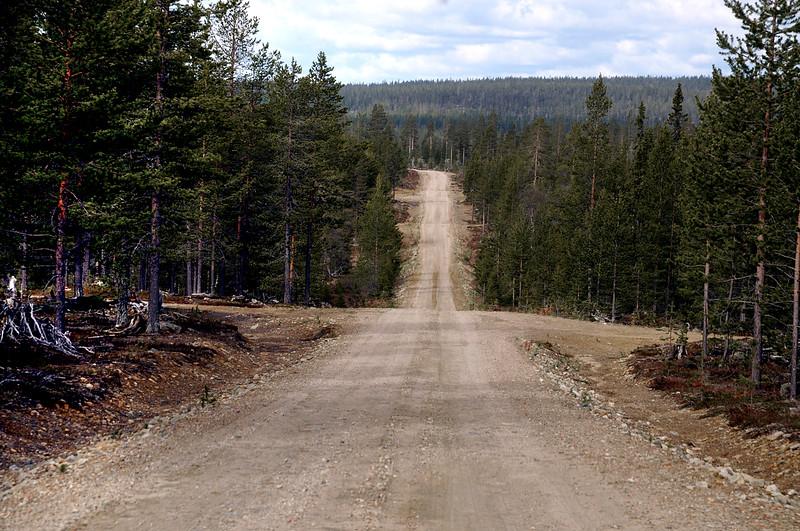 Metsäautotie Lokan itäpuolella