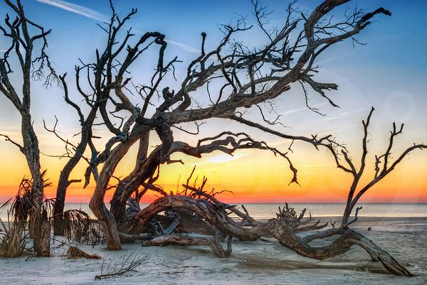 Jekyll Island_Driftwood Beach_1897