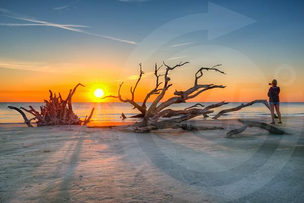 Jekyll Island_Driftwood Beach_1968