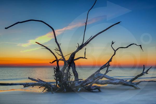 Jekyll Island_Driftwood Beach_1777