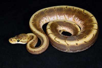 B2153, Female Spinner