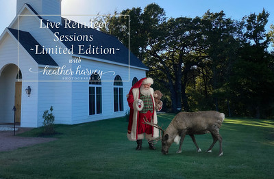 Live Reindeer Sessions 2