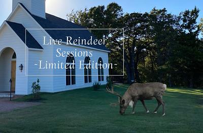 Live Reindeer Session