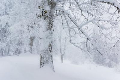 Winter / Weggis, Switzerland