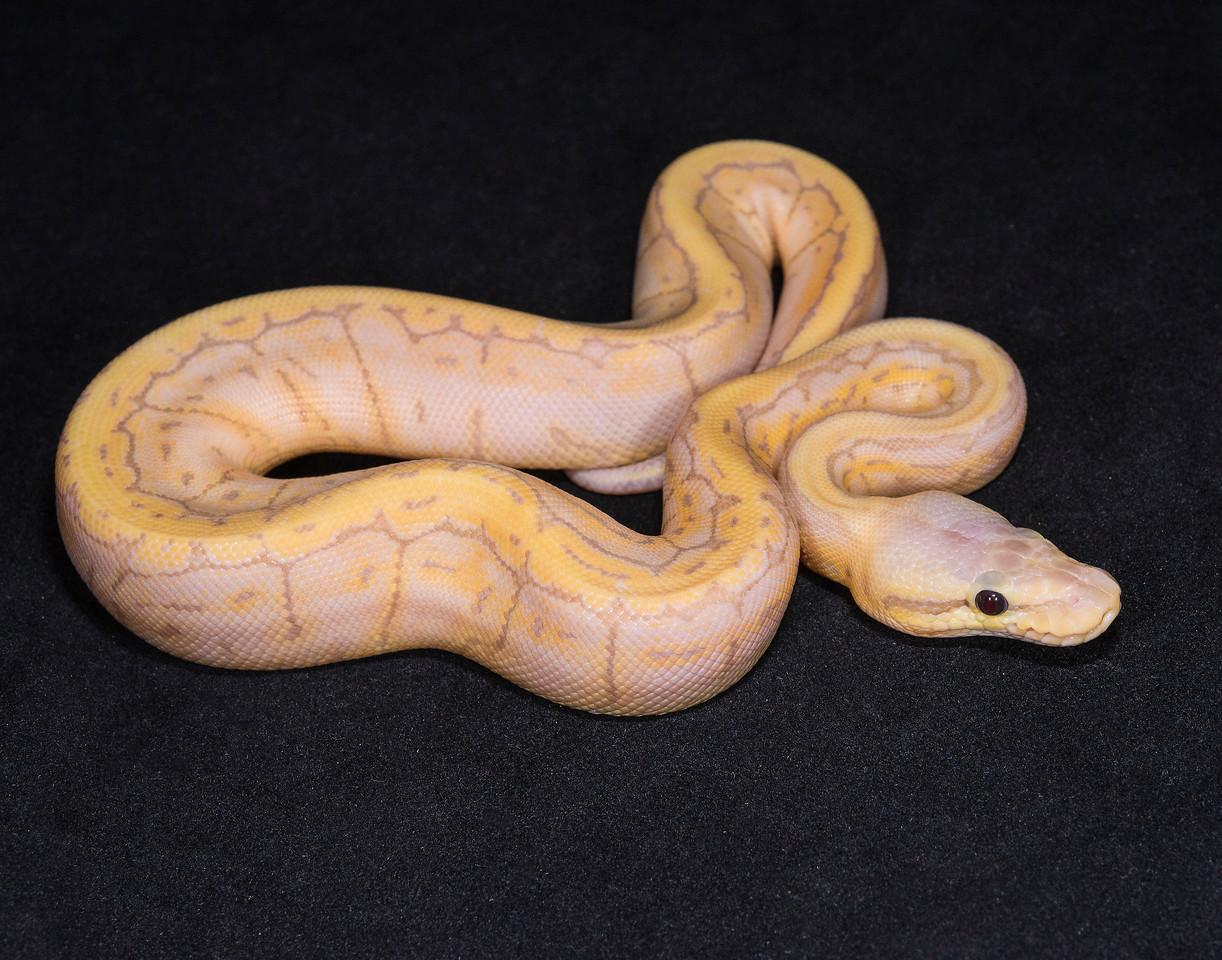 #1739, Female Banana Pastel Pinstripe, $650