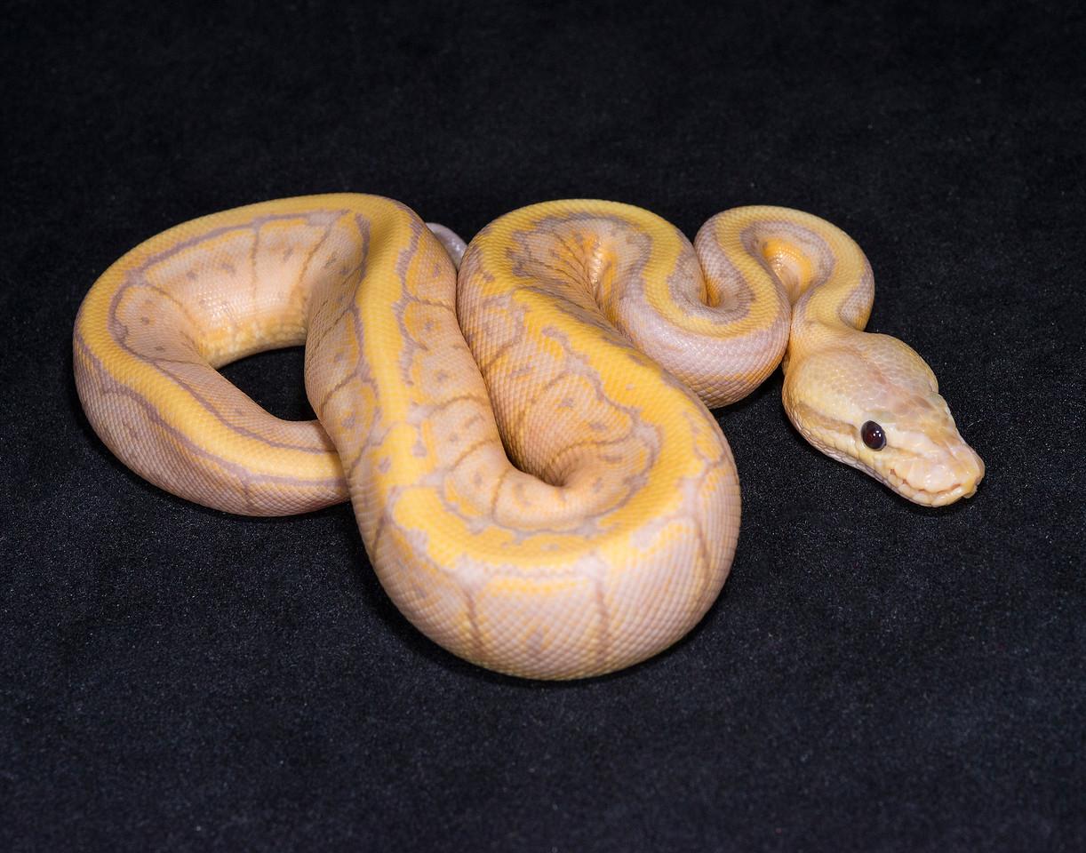 #1740, Male Banana Pastel Pinstripe, $225