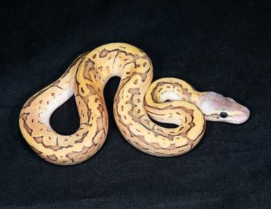 #2076, Male Pastel Jigsaw (Mojave Pinstripe), $175