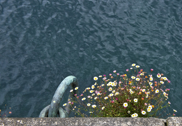 Flowers in a crannied wall #3<br /> La Coruña, Spain<br /> <br /> P348