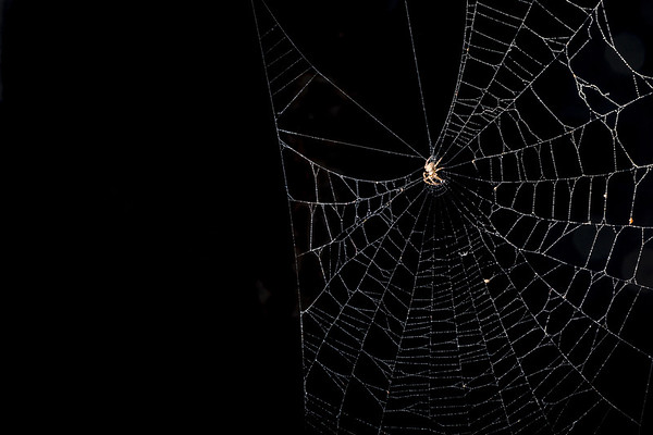 Spiders and Insects