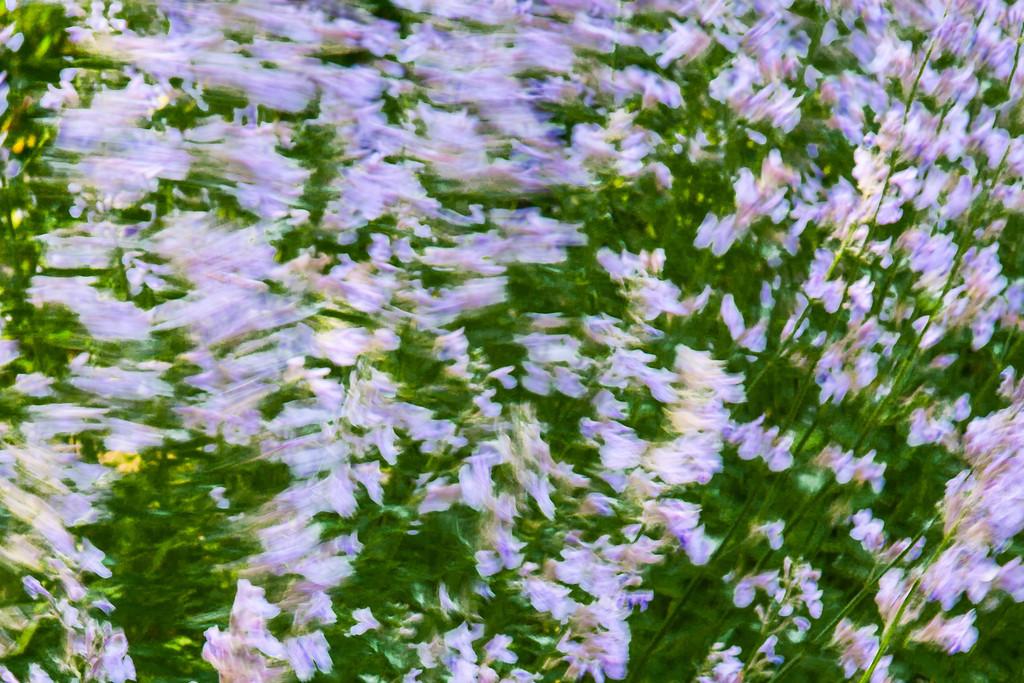 Blowing flowers