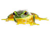 Green frog isolated on white