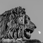 One of four lions adorning the ends of Budapest's Lánchíd. Installed in 1852 by Marschalkó János, the sculptures predate those on London's Trafalgar Square by 15 years.