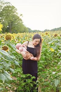 Sunflower0023