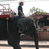 Elephant on the street