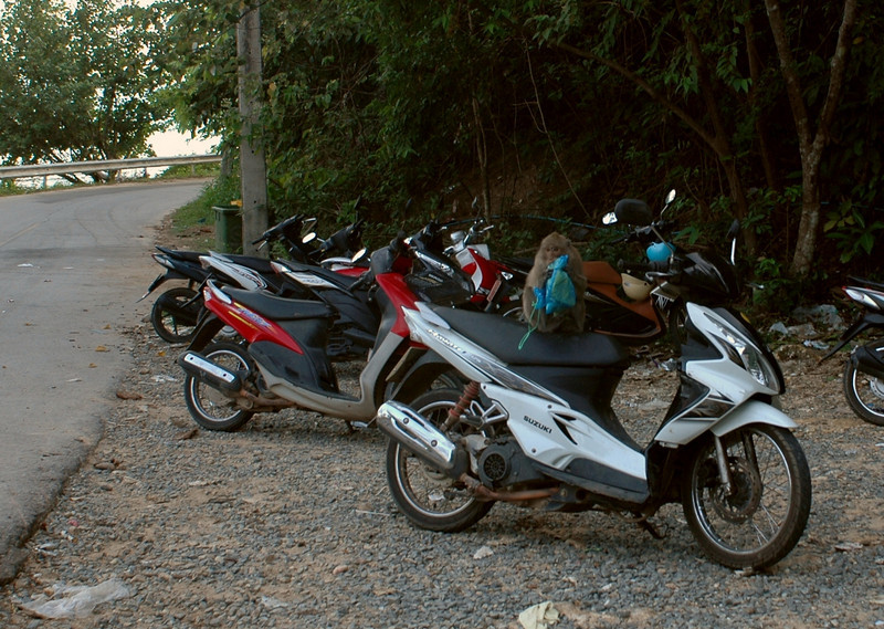wild monkeys seem to like the motorcycles