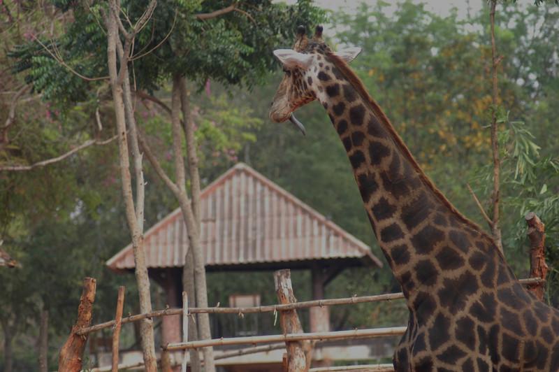 Korat Zoo