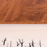 Over millennia, the underground streams which give life to the Namib occasionally shift in their course. The trees of the Dead Vlei have not drunk water in hundreds of years.