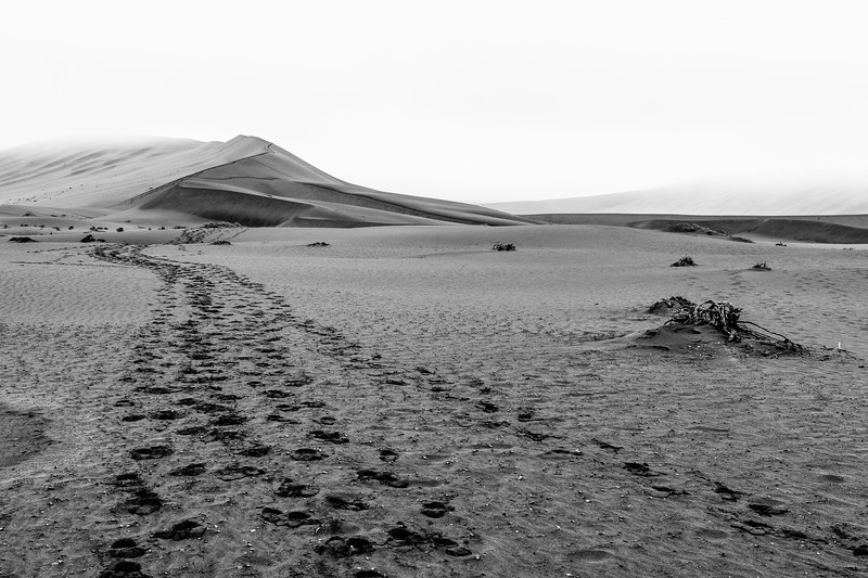The sparse tracks laid by gemsbok and human visitors are the only recognisable landmark in many parts of the Namib wilderness.