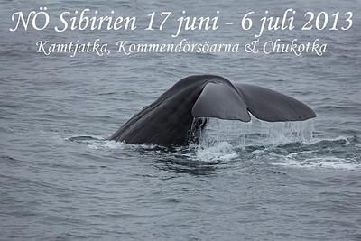NE Siberia 2013