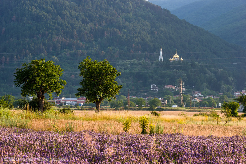 Lavender field and the Shipka Memorial Church in the background