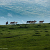 Semi-wild horses in the Central Balkan Mountains