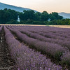 Sunrise over Lavender fields