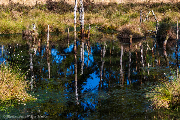 Reflections in the Farmers moor in Tiste, Germany –What's happening in January 2020