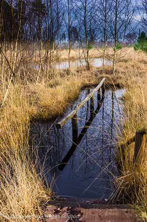Hochmoor / Farmer's swamp in Tiste