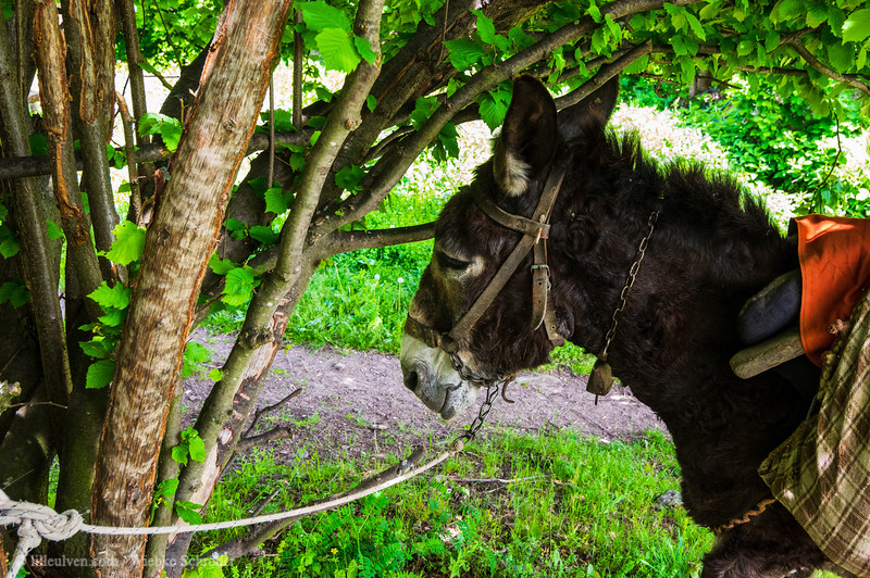 Working animals in the Rhodope Mountains
