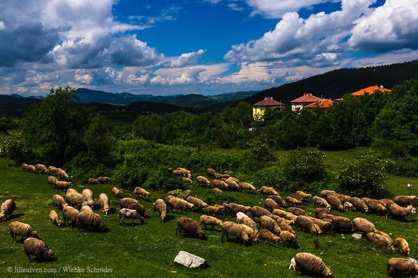 Shepherd in the Rhodope Mountains