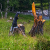 Wooden art in Scotland