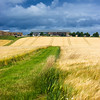 Scottish fields of gold
