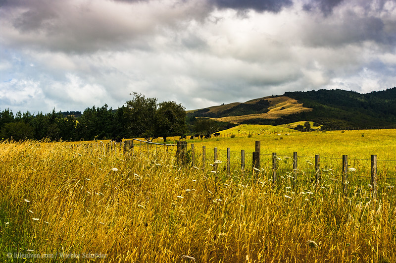 Looking over the fields of Orere Point, New Zealand