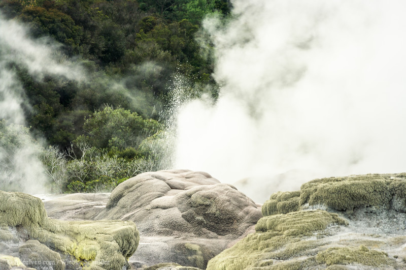 The Pohutu Geyser in Te Puia is one of the famous geysers in the world, know for its frequent eruptions of approximately one in every 50 minutes.